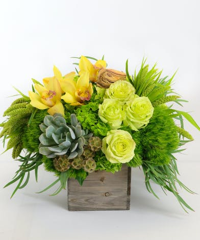Yellow Orchids, Jade Green Roses, California Succulents