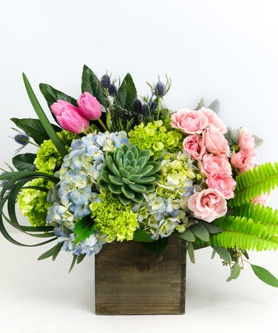 Spray Roses, Succulents, Hydrangea & Tulips