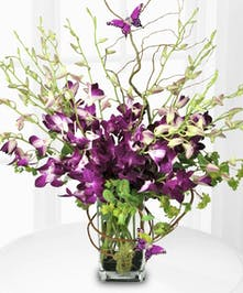 Deluxe Dendrobium Orchid Vase