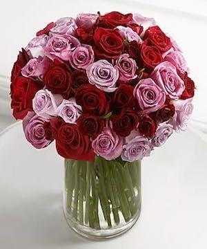Opulence Roses
