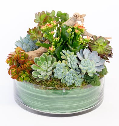 Locally Grown Succulent Plants, Florist in San Diego