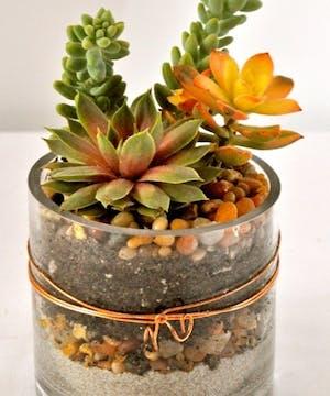 Succulent Plants In A Cylinder Vase
