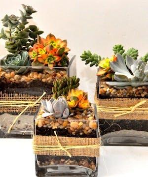 Burlap & Twine Succulent