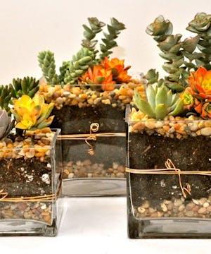 Gorgeous Succulent Plants In A Unique Vase