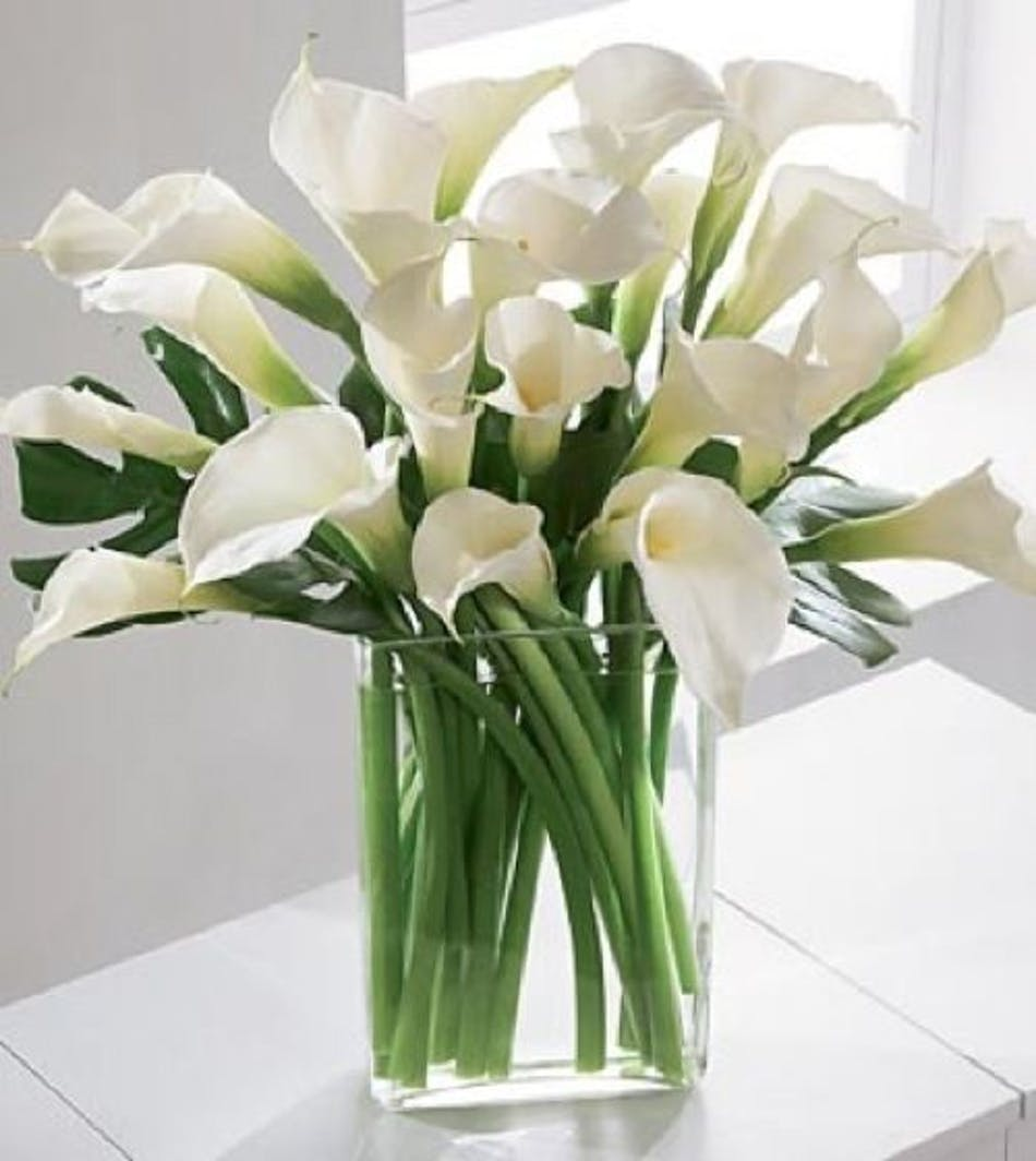 Del mar calla lily del mar calla lilies delivery conditions reward points izmirmasajfo