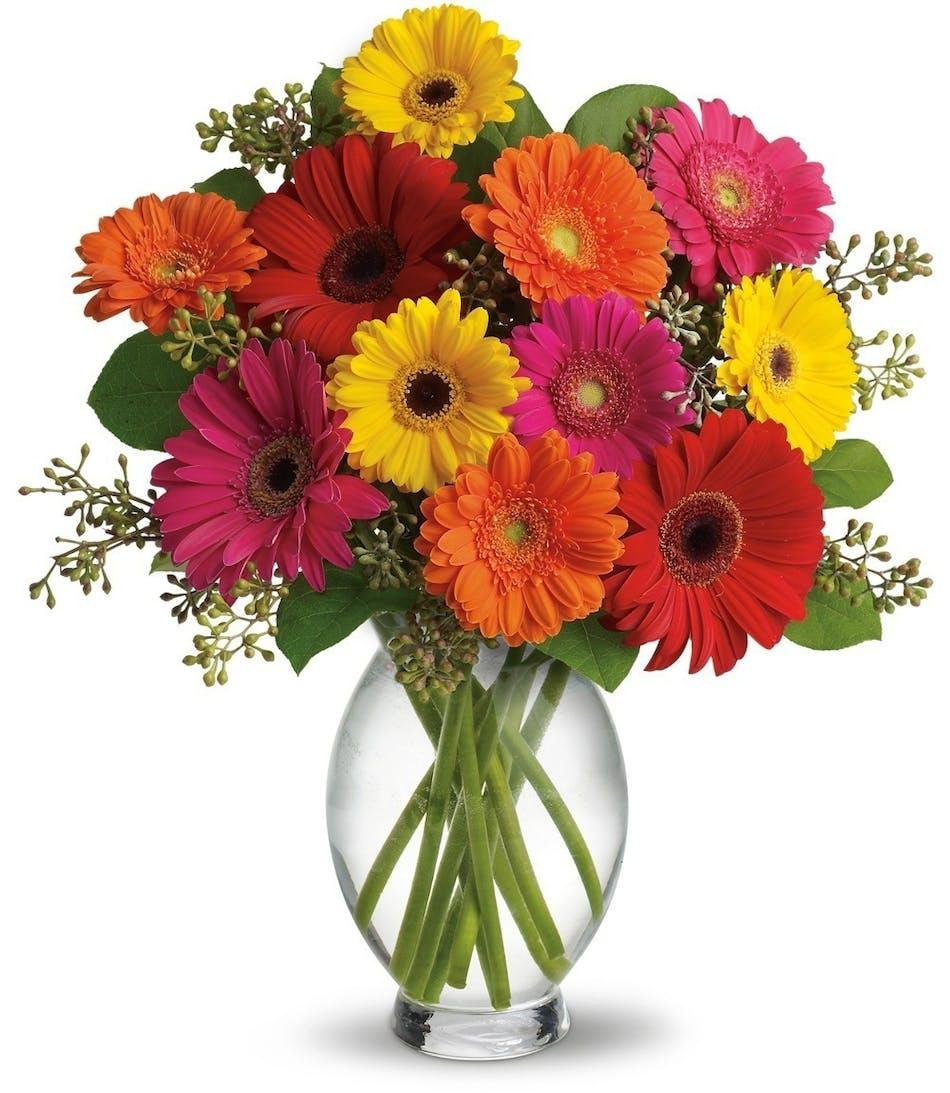 Great gerberas farm fresh daisies san diego flower shop gerber daisies floral arrangements florist san diego izmirmasajfo