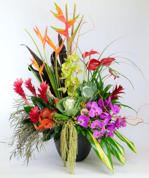 Banksia Protea, Green Orchids, Purple Orchids