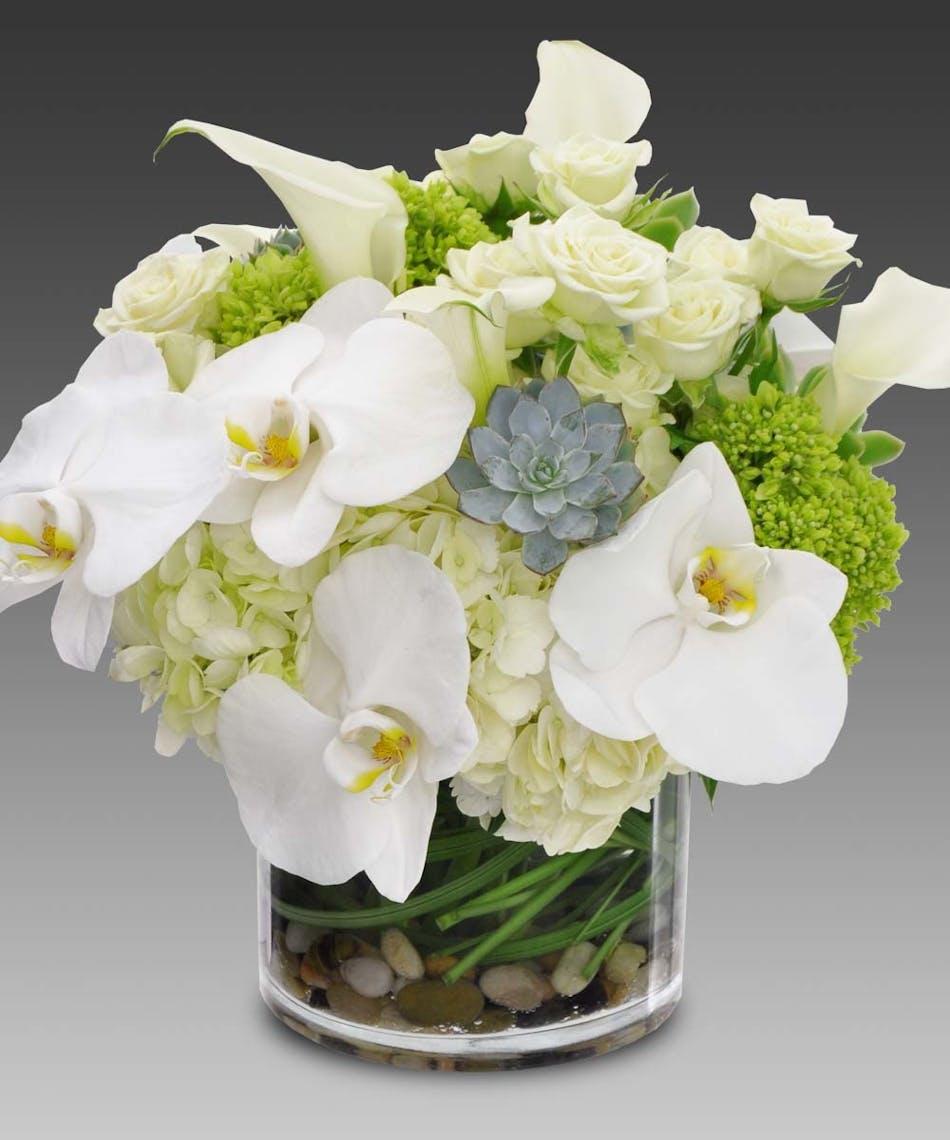 San diego phalaenopsis orchids san diego hydrangeas san diego san diego phalaenopsis orchids san diego hydrangeas san diego succulents san diego white roses san diego calla lilies izmirmasajfo