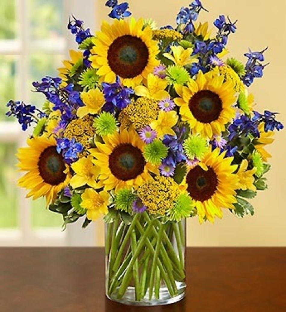 Sunflower sunflowers del mar