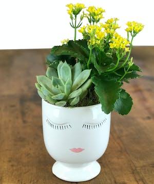 succulent plants, flowering plants