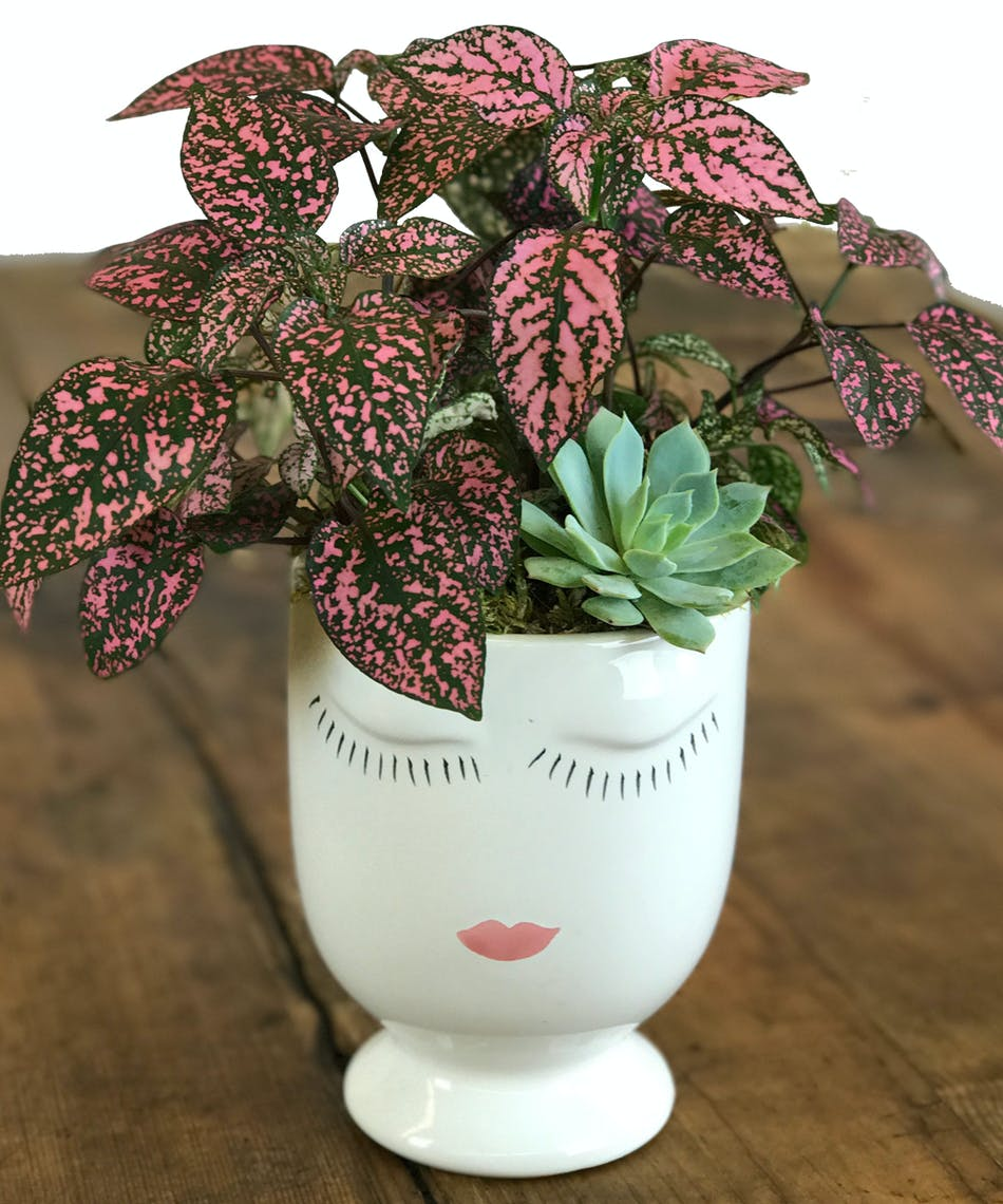 The Fascinator Green Plants Plants Gifts San Diego Ca