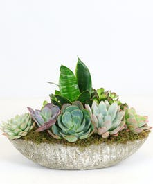 Succulents in Stone