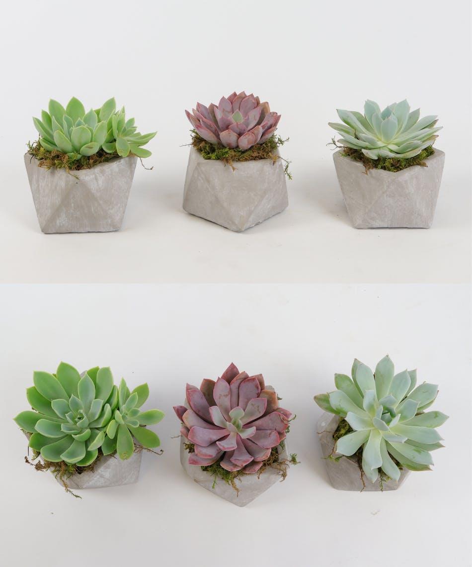 Succulent Geo Trio Voted Best Florist In San Diego San Diego Ca