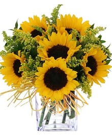 Sunflower Simplicity