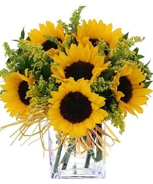 California Sunflowers, Summer Flowers
