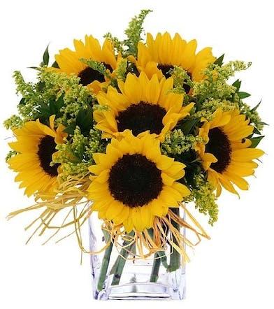 California Sunflowers, Summer Flowers