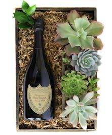 Champagne & Succulents