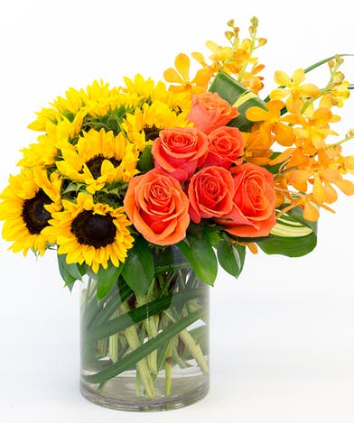 Gorgeous Sunflowers, Stunning Roses, Macara Orchids