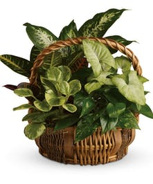 Stylish Basket Filled With Beautiful Green Plants