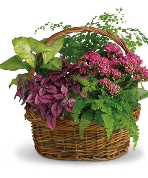 Basket filled with lush green and flowering plants