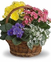 Blooming Basket By Allen's Flowers
