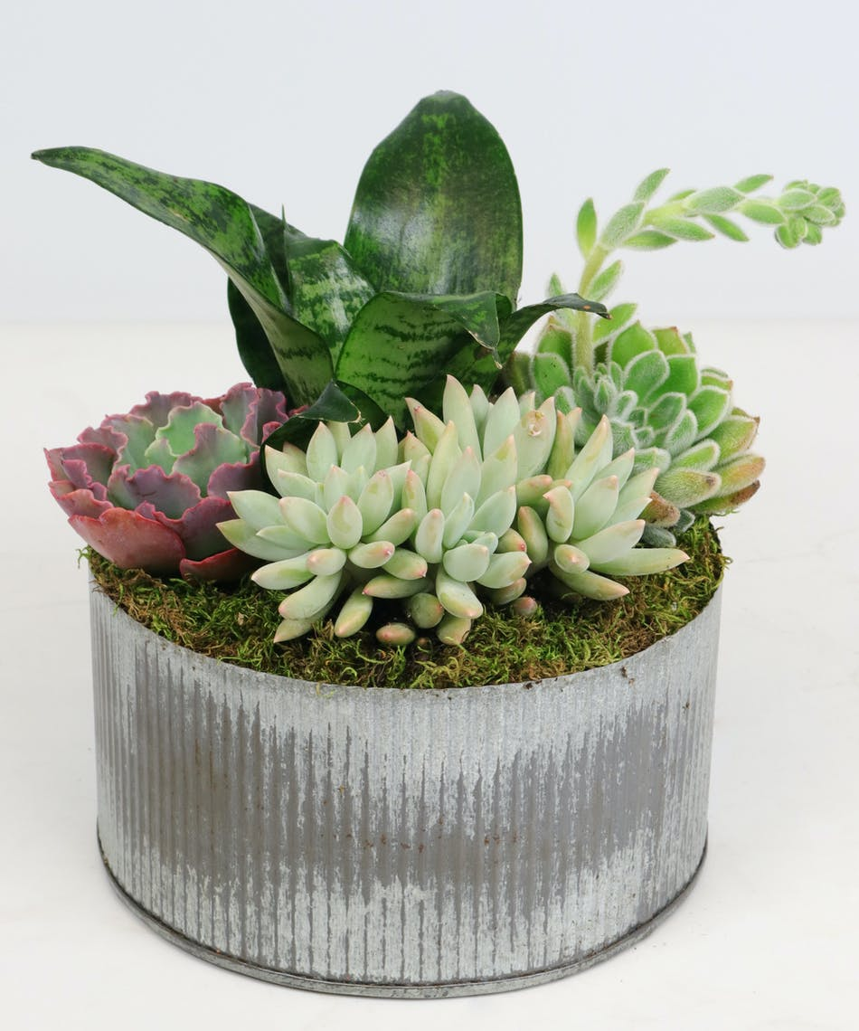 Succulent Garden Tin: Succulent Garden Tin - Voted Best Florist In ...