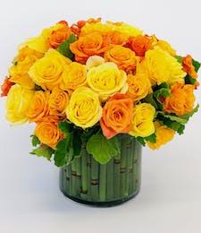 Sunburst Roses