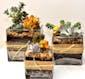 Succulent Garden - 4x4