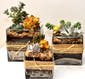 Succulent Garden - 6x6