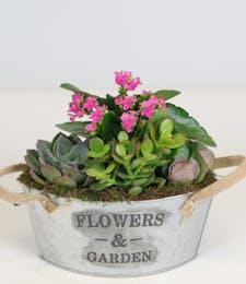 Kalanchoe & Succulents Garden Tin